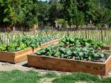 ... Vegetable Garden - How To Build A Raised Bed Vegetable Garden Box