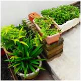 low budget garden ideas, small garden ideas, garden for small places ...