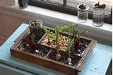 indoor compost garden put your kitchen scraps to work turn your
