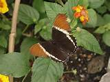 butterfly garden gardening ideas pinterest