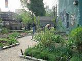Marvelous Urban Gardens On Garden With How To Create An Urban Garden ...