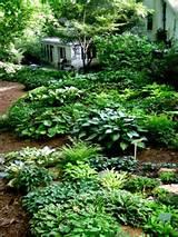 ... Gardens, Gardens Hosta, Landscape Ideas, Shades Gardens, Hosta Gardens
