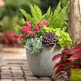 posted in garden and tagged container garden gardening planter ideas