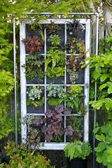 wooden window frame succulent garden old window frames garden ideas
