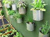 Another great way to recycle your old cans! - Roots Nursery : Roots ...