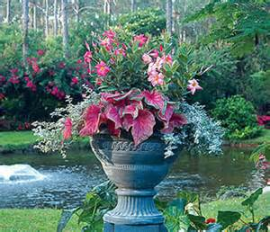 container gardening tips ideas flower plant container gardening