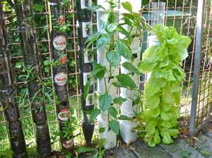 ideas for container gardening google earthly touch container