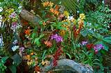 orchids garden flowers gardening ideas pinterest