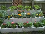 Cinder block raised bed. Then.Beach Gardens, Gardens Ideas, Gardens ...