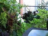 Apartment Balcony Garden Ideas: 21 Amazing Small Balcony Garden Ideas ...