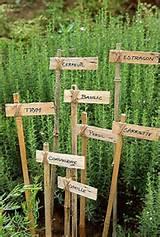 diy garden stakes
