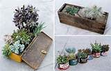 Botanical Junkie : Creative Container Gardening