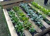 horizontal pallet garden garden pinterest