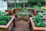 Gemüsegarten Anlegen – Wichtige Tipps und Tricks für eine reiche ...