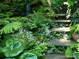 Woodland Garden - Eclectic - Landscape - other metro - by Jay Sifford ...