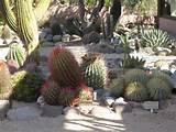cactus garden ideas xeriscaping et al pinterest
