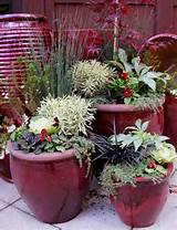 Container Pot ideas | Gardening | Pinterest