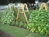 Veggie garden trellis ideas | Back yard 100 summer st | Pinterest