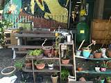 school garden school ideas pinterest