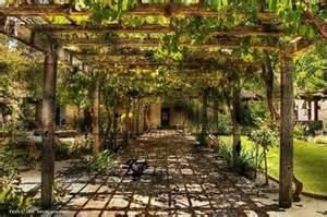Gardens Ideas, Gardens Arbors, Grape Vines, San Luis Obispo, Hanging ...