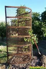 unusual trellis google search