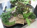 dish garden | Davao Delights | ~Miniature gardens~ | Pinterest