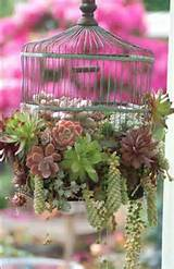 mini succulent garden garden ideas pinterest