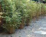 70 bamboo garden design ideas – how to create a picturesque ...