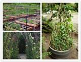 15 creative DIY garden pea trellis | How To Instructions