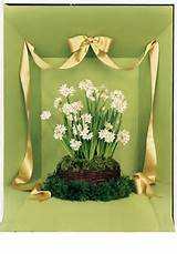 Martha Stewart | Garden Club
