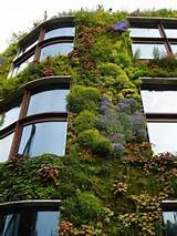 Vertical gardens | Garden ideas | Pinterest