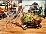 ... shop now we have Terrarium and Fairy Garden Moss for your terrarium