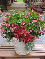 Brighten up a shady spot with a Shade loving Container Garden.