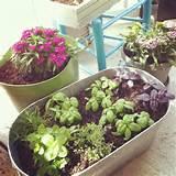 Easy herb container garden. | Garden & Container Garden Ideas | Pinte ...