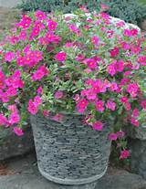 Container Garden Ideas - Concrete Container Garden with River Stones