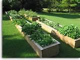 diy 10 raised garden beds most popular pins