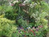 tropical flower garden » tropical flower garden