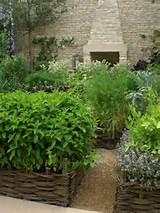 herb garden city garden ideas pinterest