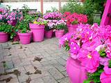 flowers photos ideas for outdoor flower pots