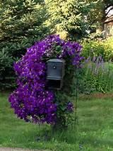 Gardens Ideas, Gardens Heavens, Pretty Flowers Gardens, Gardens ...