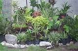 garden plants ideas - small rock garden ideas photograph rock garden ...