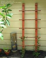 crafts hobbies trellis ideas 1 by abl newbie