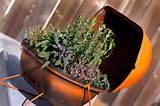 Repurpose Garden Ideas contemporary-landscape