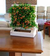 small indoor garden ideas image