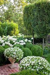 Annabelle hydrangeas, boxwood, and urns filled with white flowers^^