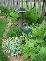 part of the shade garden in early spring gardening pinterest