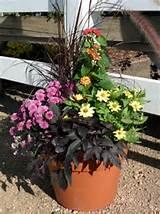 fall container garden ideas outdoors gardening pinterest