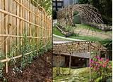 bamboo #garden #trellis #arbor #climbingPrivacy Fence, Gardens Ideas ...