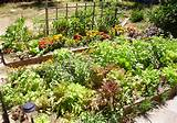 dead-gorgeous-vegetable-garden-layout-ideas-pinterest-vegetable-garden ...