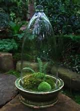 Woodland Moss & Fern Terrarium by pomona.miguel